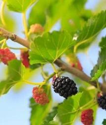 4 loại trái cây giảm béo phù hợp nhất để ăn ngay bây giờ, vừa giải độc tố vừa tẩy tế bào da chết